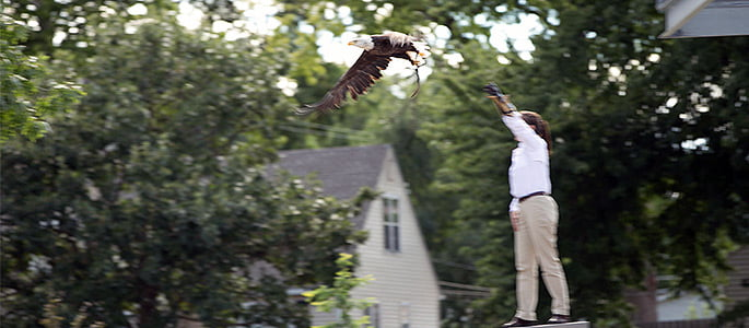 jdac eagle header