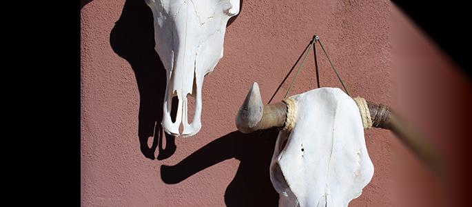 case emily skulls