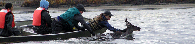 Hastings College graduate Charlotte Westing is in wildlife management in Alaska.